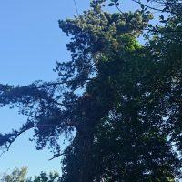 Arboriginal Tree Services – 1