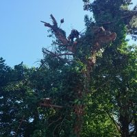 Arboriginal Tree Services – 10
