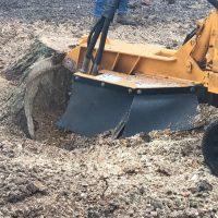 Arboriginal Tree Services – 11