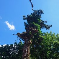 Arboriginal Tree Services – 11