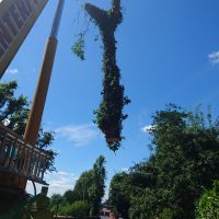 Arboriginal Tree Services – 12