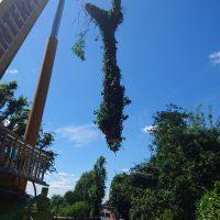 Arboriginal Tree Services – 12