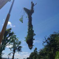 Arboriginal Tree Services – 13
