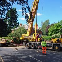 Arboriginal Tree Services – 14