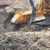 Arboriginal Tree Services – 15