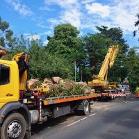 Arboriginal Tree Services – 15