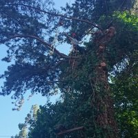 Arboriginal Tree Services – 2