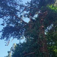 Arboriginal Tree Services – 2
