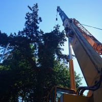 Arboriginal Tree Services – 3