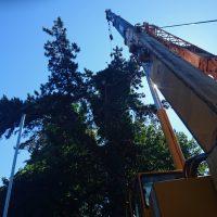Arboriginal Tree Services – 4
