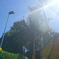 Arboriginal Tree Services – 5