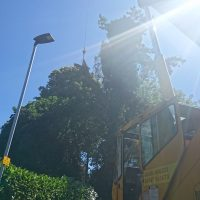 Arboriginal Tree Services – 6