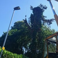 Arboriginal Tree Services – 7