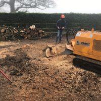 Arboriginal Tree Services – 8
