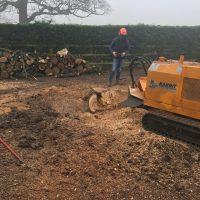 Arboriginal Tree Services – 9