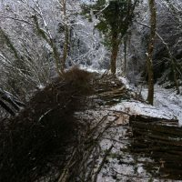 coppicing-001