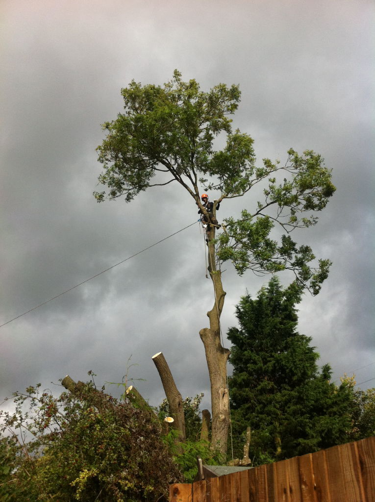 Woodland Management Coppicing Tree Services Hereford