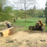 site clearence stump grinding 001