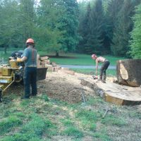 site clearence stump grinding 003