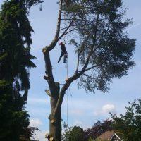 tree-web-01