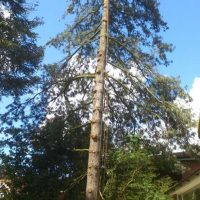 tree-web-02