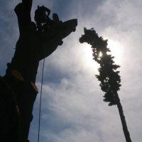 tree-web-04