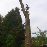 tree-web-05