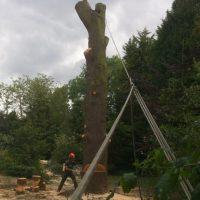 tree-web-08